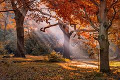 Forever Autumn (Valentin Laurentziu) Tags: nature autumn light morning leafs grass park sun tree plant
