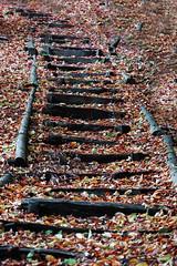 weathered stairs (Rosmarie Voegtli) Tags: inexplore stairs treppe wald verwittert weathered autumn autunno automne herbst hofstettermatte solothurn switzerland hiking saturdayforstairs