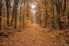 Autumn at Awenda (naturethroughmyeyes.com) Tags: awendaprovincialpark tiny ontario canada northamerica barbaralynne copyrightbarbdarpino barbaralynnedarpino barbdeardendarpino canon1dx eos1dx nature fall autumn outdoors naturephotographer femalephotographer wildlifephotographer