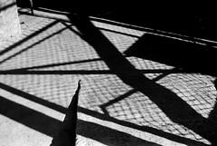 Shadows, Alameda (RoryO'Bryen) Tags: roryobryen copyrightroryobryen cali shadows sombras sombrasnadansombras nada máscolombiacolombierangefinderleica m3filmanalogue photography 35mm