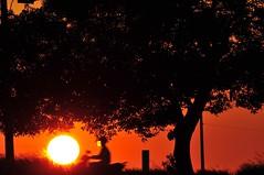Sunset rider (mattlaiphotos) Tags: sunset sun solar silhouette tree rider contour
