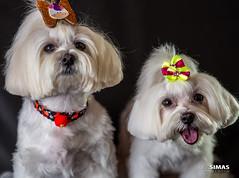 Fifi & Nina (luizalexandresimas) Tags: dog cão bichinho pet amigo