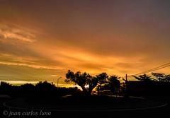 CONTRALUZ (juan carlos luna monfort) Tags: lasenia tarragona montsia olivo amanecer sunset sol contraluz nikond7200 irix15 calma paz tranquilidad sombra arbol