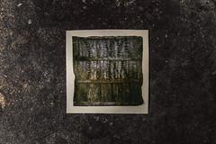fence (3rd-Rate Photography) Tags: emulsionlift polaroid film 600film sun600 fence overgrown emulsiontransfer canon jacksonville florida 3rdratephotography earlware 365