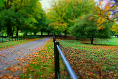 Autumn Beginnings (domwlive) Tags: trees october castleeden landscape countryside leaves fall countydurham rural northeastengland landscapes autumn hartlepool england unitedkingdom gb