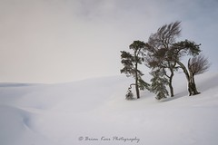 Standing In Snow (.Brian Kerr Photography.) Tags: lpoty landscapephotographeroftheyear2018 briankerrphoto snow trees yourviewrunnerup