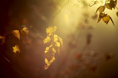 Foggy fall morning (fredrikamarias) Tags: fog foggy bokeh bokehlicious nature finland fall autumn morning october mist colorful colors
