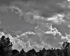 IMG_4927a (rudyschnick) Tags: monochrome bnw clouds tree landscrape