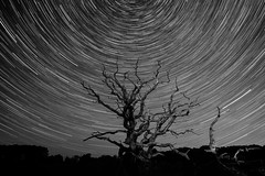 Monochrome nights (Waving lights in the dark) Tags: sky stars rotation rotate longexposure sonyimages wavinglightsinthedark nightphotography nocturnal darkness lightjunkies shutternights addictedtonights abandoned dark night norfolk norfolkbroads broads spin startrails spider monochrome monochromatic blackandwhite afterdark