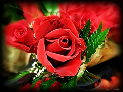 Remembering Those Lost (Chris C. Crowley) Tags: rememberingthoselost tributetothoselostduringhurricanemichael roses flowers bouquet redroses botanical floral
