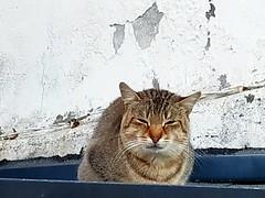 (celicom) Tags: gato animal