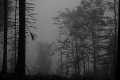 foret (Herve Sapin) Tags: forêt brume mist wood nature ambiance noirblanc