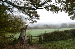 Footpath (sgreen757) Tags: nikon d7000 cotswold way path footpath south glos gloucestershire style gate tree trunk hedge autumn october 2018