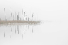Nebelbank (IIIfbIII) Tags: nebel fog landscape nature brume landschaft water wasser lake see november canon mv mecklenburg müritz nationalpark art zen white trees moor schilf heaven light photography fantastic