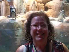 2018-09-30 10.53.48 (littlereview) Tags: carolinas littlereview 2018 travel museum animal penguin family personal aquarium blog