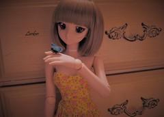 Blue Butterfly (Lurkz D) Tags: dollfiedream dd lurker custom vinyl volks