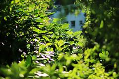 sunshine (Katrinitsa) Tags: europejuly2018 koblenz germany sunlight sunshine plant garden sun daylight light shadows glint glitter house bokeh macro focus nature landscape green morning amazing awesome dream dreamer beauty beautiful trees art artistic canon canoneosrebelt3i ef35mmf14lusm summer