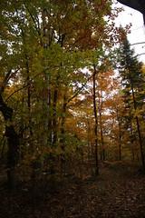 IMG_6322 (sjj62) Tags: fishcreekwi doorcountywi fall autumn woods doorcounty fishcreek 40d
