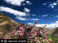 #Repost @raghuveer_singh89 (@get_repost) ・・・ The Amen of nature is always a flower!🌺🌸⛰❣️ #nature#naturelovers#naturephotography#buckthornberry#buckthorntree#natureelements#naturebliss#wanderlust#wanderlusting#spitivalley#spiti#spit (SoulMountainExpeditions) Tags: travel india mountains adventure