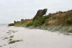 (Boyens.) Tags: 20180927016 balticsea ostsee strand dünen kronsgaard wikingerland angeln schleswigholstein