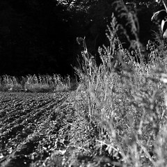 foma100141018009 (salparadise666) Tags: tags landscape rural rolleiflex sl66 planar 80mm fomapan 100 boxspeed caffenol rs 15min germany lower saxony hannover region