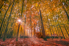 Shades of Fall (ahmedamaan) Tags: autumn landscape germany 2018 fall colors trees leaves europe travel travelblog topeuropephoto topgermanyphoto backpacking canon cnntravel bbctravel beautifuldestinations bbc nature natgeo bremerhaven
