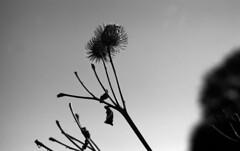 f3 rr80s022 (salparadise666) Tags: nikon f3 series e 35mm rollei retro 80s boxspeed caffenol rs 15min nils volkmer nature landscape contrast lower saxony germany autumn