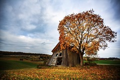 Windfall (Thomas Grotmol) Tags: leaves fallen oldhouse old norwegianautumn autumnbeauty clouds fall høst autumn norge norway akershus
