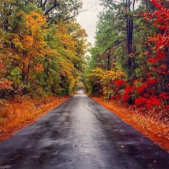 Happy Texas Tuesday! We are impatiently waiting on fall colors to arrive in East Texas. Stay tuned for updates! Photo taken in Diana, Texas by @ryanjpolk. (Texas Forest Trail) Tags: texas east easttexas txforesttrail forest trail pinecurtain pine curtain pineywoods