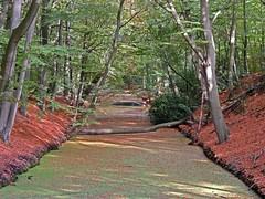 Landgoed Clingendael (Shahrazad26) Tags: landgoedclingendael clingendael bos forest foret wood wald denhaag sgravenhage thehague lahaye nederland holland thenetherlands paysbas zuidholland