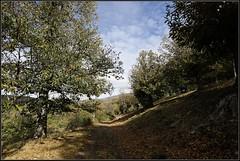 Otoño en Hermisende (II) (Pablo M.B.) Tags: paisaje landschaft táj paysage landscape otoño autumn fall automne ősz herbst