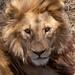 Safari Flickr (124 of 266)