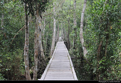 Tanjung Puting NP, Borneo, Indonesia (JH_1982) Tags: rainforest forest nature landscape scenery scenic landschaft hiking wandern path jungle tanjung puting national park np pn parc nacional nationalpark taman nasional танджунгпутинг regenwald kalimantan borneo pulau 婆罗洲 ボルネオ島 보르네오섬 калимантан indonesia indonesien indonésie 印度尼西亚 インドネシア 인도네시아 индонезия