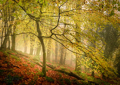 Autumn Mist & Colours (PKpics1) Tags: autumn fog tree trees woods woodland forest floor leaves mist rain cloudyday trunk bark yellows greens red orange england exmoor horner landscape woodscape wood