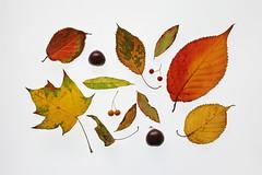Autumn selection (Arkle1) Tags: smileonsaturday seasonsflora