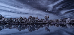 Lindo Lake Panorama in Infrared (Bill Gracey 24 Million Views) Tags: infrared infraredphotography convertedinfraredcamera clouds water lindolake nature surreal trees composition reflections ir lakeside