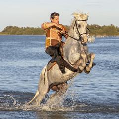 Cheval cabré (Xtian du Gard) Tags: xtiandugard camargue chevalcabré cheval cavalier manadier provence france nature animaux waterscape equitation prancinghorse
