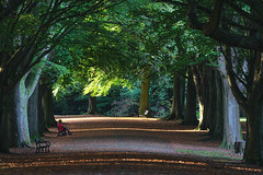 A Quiet Place (Paul C Stokes) Tags: clifton bristol uk england sw southwest south west country promenade avenue trees treeline bench benches park leaves fall falling autumn lone figure read reading dappled light canopy sony a7r2 a7rii 70300g sitting quiet contemplation