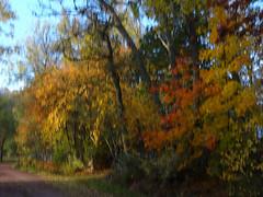 Höstfärger (evisdotter) Tags: höstfärger autumn colors light trees träd icm intentionalcameramovement digitaloilpainting cartoon