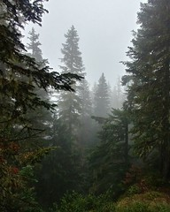Into the woods (The Thirsty Wanderers) Tags: woodland forest washington fog pinetrees
