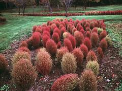Yuni garden in autumn (threepinner) Tags: yunigarden yuni hokkaidou hokkaido northernjapan autumn mamiya m645 45mm f28 positive selfdeveloped ゆにガーデン 由仁町 北海道 北日本