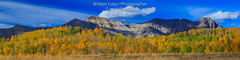 Autumn Afternoon Below the Sneffels Range (Bridget Calip - Alluring Images) Tags: alluringimagescolorado autumn bridgetcalip colorado coloradomineralbelt dallasdivide fall grandmesauncompaghreandgunnisonnationalforest llc mountainwavecloud ouraycounty rockymountains sanmiguelcounty sneffelsrange telluride allrightsreserved aspentrees backroads blueskies changingseasons clouds copyrighted explorecolorado fallfoliage forest hiking leafpeeping outdoors outdoorscolorado panorama recreation roadtrip scenicdrive solitude