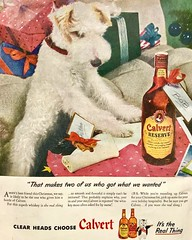 Doggie Gets Whiskey for Christmas (saltycotton) Tags: holidays christmas pets animals dogs terrior alcohol whiskey calvert theamericanlegionmagazine vintage magazine advertisement ad 1945 1940s