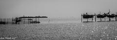 Venezia, isola del Lazzaretto vecchio (Gian Floridia) Tags: lazzarettovecchio venezia venice bn bw bienne lagoon laguna mare nets reti sea steccato