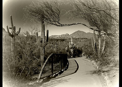 desert stroll (milomingo) Tags: nature tree desert cactus southwest monochrome sky mountain path walkway garden desertbotanicalgarden dbg phoenix arizona arid photoborder outdoor
