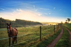 Waldsaumweg (Wolfgang Staudt) Tags: waldsaumweg losheimamsee saarland hunsrueck deutschland hausbach britten wanderweg traumschleife rundweg wandern natur wald waldrand laendlich abgelegen tourismus saarhunsruecksteig saarschleifenland