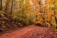 Autumn Road (Back Road Photography (Kevin W. Jerrell)) Tags: fall autumncolors autumnbeauty naturalbeauty stonemountain rosehillva leecountyvirginia seasonal backroadphotography nikond7200