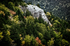 Pachyderm in the pines (FotoFloridian) Tags: nature forest mountain tree landscape scenics outdoors rockobject greencolor beautyinnature woodland pinetree valley mountainrange autumn travel whitemountains newhampshire sony alpha a6000 nik elephant