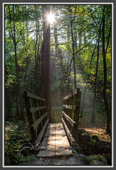SJ1_2494 - Rays (SWJuk) Tags: skipton england unitedkingdom swjuk uk gb britain yorkshire northyorkshire prioryruins boltonabbeyestate woods trees light sunlight sunburst rays sunrays sun shadows bridge 2018 oct2018 autumn autumnal autumncolours nikon d7200 nikond7200 nikkor1755mmf28 rawnef lightroomclassiccc