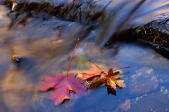 Autumn at Oak Creek (Steve O'Day) Tags: arizona sedona water canon timelapse nature fall autumn hike hiking